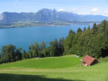 Thun lake field water. View of the Thun lake with field Royalty Free Stock Photography