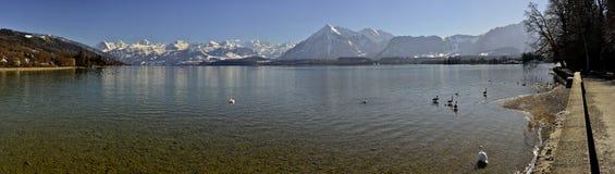 Thun sjö med Berner Oberland Royaltyfri Foto