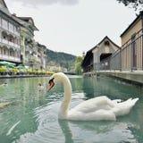 Thun stad och flod i Aare, Schweiz - 23 juli 2017 Royaltyfri Bild