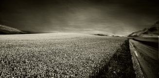 Thunder. Panorama of country side - thunder Stock Photography