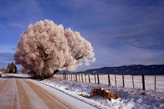 Thunder City Road - Winter. Icy rural road in Valley County Idaho, Winter Stock Photo