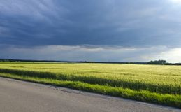 Thunder clouds above wheat field Stock Photo