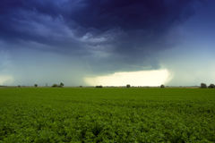 Thunder in the field. Summer thunder cloud in the field Royalty Free Stock Photos