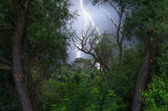 Thunder, lightnings and rain during storm over forest Stock Photos