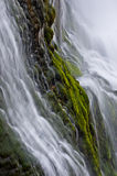 Thunder River Moss Stock Images