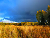 Thunder-storm. In a floor. A weak rainbow on a background of dark blue clouds, a high field grass and a marge of a wood Stock Photo