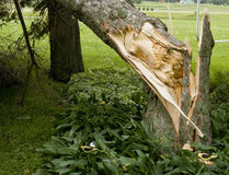 Thunder storm wind damage Stock Image
