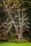 Thunderbolt broken fir Stock Photo
