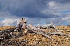 Thundercloud above a dead forest Royalty Free Stock Image
