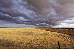 The thundercloud above a field royalty free stock images
