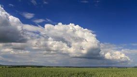 Thunderclouds rozwija nad pszenicznym polem zbiory