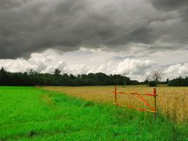 Before the thunderstorm. The rain will go after five minutes Royalty Free Stock Photo
