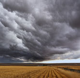 Thunderstorm above fields Stock Photography