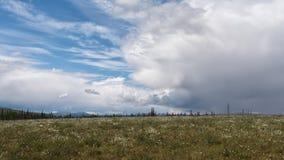 Alaskan Apline meadow in bloom with thunderstorm approaching stock image