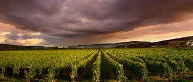 Thunderstorm clouds over the vineyard Stock Photos