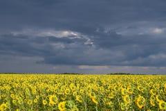 Thunderstorm field royalty free stock photos