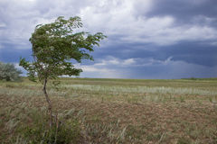 Thunderstorm in green steppe with dark blue clouds and rain Royalty Free Stock Photography