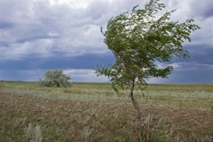 Thunderstorm in green steppe with dark blue clouds and rain Stock Image