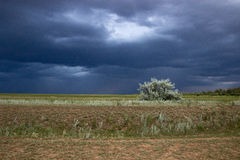 Thunderstorm in green steppe with dark blue clouds and rain Stock Images