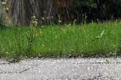 Hailstones on the ground. Thunderstorm with heavy hail and sleet showers. Hailstones on the ground Royalty Free Stock Photos