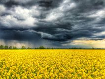 Thunderstorm over canola field stock image