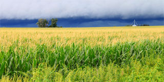 Thunderstorm Over Illinois Cornfield. Ominous clouds precede the strong winds of a thunderstorm a cornfield in Illinois stock images