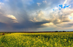 Thunderstorm over rape meadow. Rape field under heawy clouds before thunderstorm Royalty Free Stock Photos