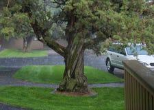 Thunderstorm, Rain Downpour Stock Image