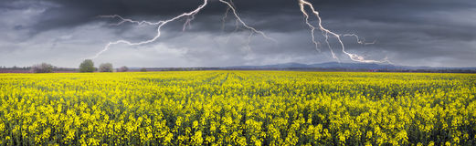 Thunderstorm  on rapeseed field Royalty Free Stock Photo