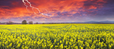 Thunderstorm  on rapeseed field Stock Photo
