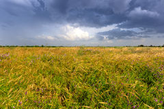 Thunderstorm in steppe Royalty Free Stock Photography
