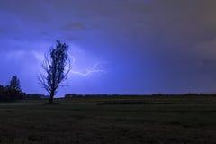 Thunderstrike силуэта дерева Стоковые Изображения RF