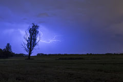 Thunderstrike de silhouette d'arbre Images libres de droits