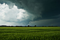 Thundery clouds over a field. The image shows dark rainclouds over a field (barley) and was taken a few minutes after a small tornado. I'm not sure, but I think stock photography