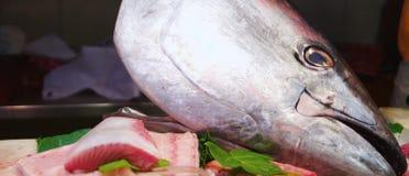 Thunfisch stockfotografie