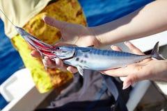 Thunfisch auf dem Haken Lizenzfreie Stockfotos