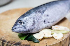 Thunfisch gesetzt auf den Hackklotz lizenzfreie stockbilder