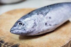 Thunfisch gesetzt auf den Hackklotz Lizenzfreies Stockfoto