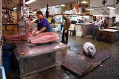 Thunfisch am Tokyo-Fischmarkt Lizenzfreies Stockbild