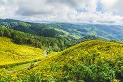 Thung Bua Tong Forest Park Doi Mae U-Kho Royaltyfria Bilder
