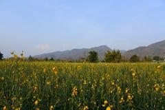 Thung Chang District Photographie stock libre de droits