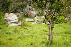 THUNG DOK KRACHIAO 18 August 2015: Stock Image
