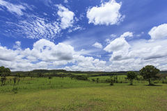 Thung Salaeng Luang Savanna in Thailand Stock Photography