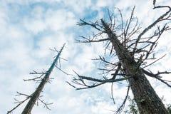 Thurston Hills Natural Area Scenic landskap Arkivbild