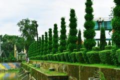 Thuya Modellen av trädet dekorerad tree arkivfoto