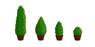 Thuya is young, evergreen 2. Thuya is young, evergreen. For planting, in a container. Isolated, on white background Royalty Free Stock Images