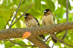 Little birds on the branch royalty free stock photography