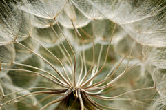 Before thw wind comes. The seeds of a flower awaiting the wind to spread them Royalty Free Stock Images