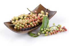 Thwaitesianum Muell Antidesma Στοκ εικόνα με δικαίωμα ελεύθερης χρήσης
