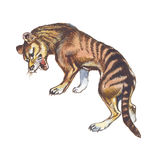 Thylacine Fotografía de archivo libre de regalías